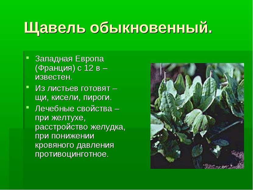 Щавель обыкновенный. Западная Европа (Франция) с 12 в – известен. Из листьев ...