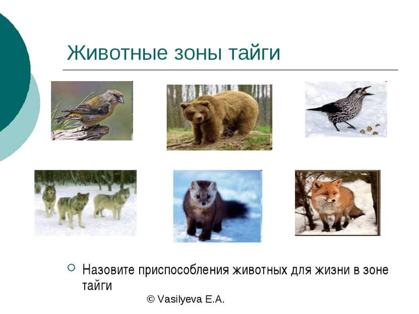 Животные зоны тайги Назовите приспособления животных для жизни в зоне тайги ©...