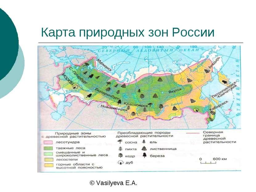 Карта природных зон России © Vasilyeva E.A.