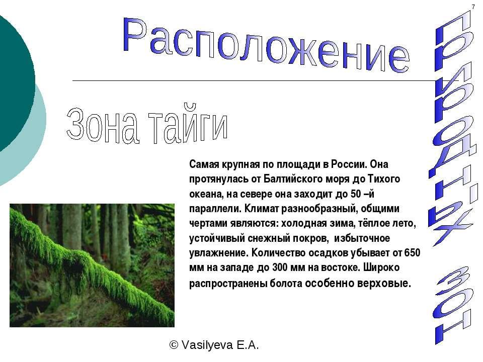 Самая крупная по площади в России. Она протянулась от Балтийского моря до Тих...