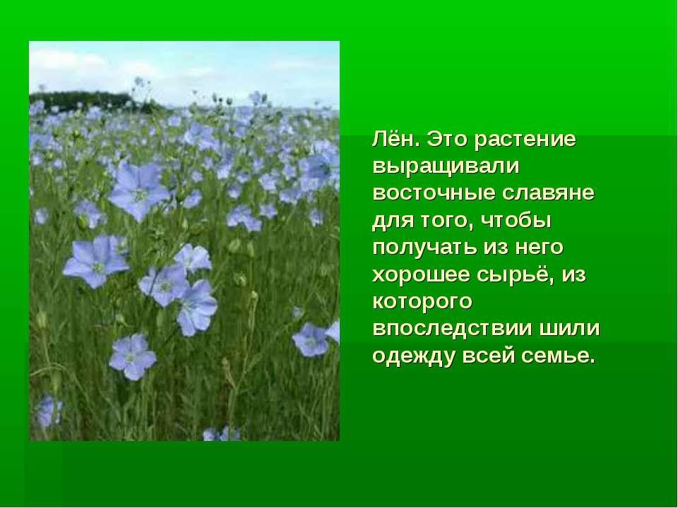 Лён. Это растение выращивали восточные славяне для того, чтобы получать из не...