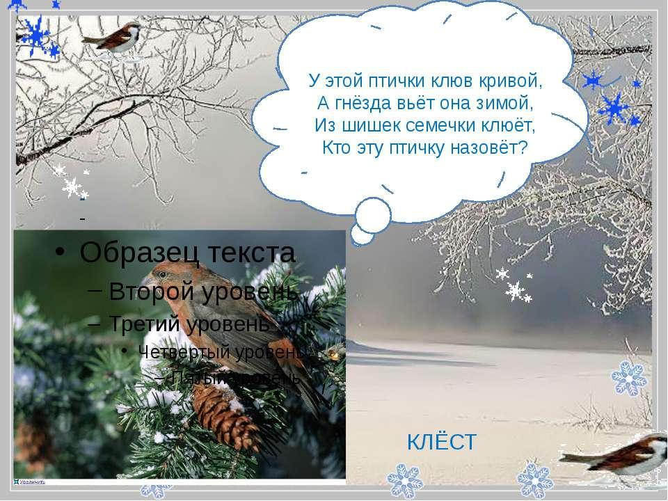 - У этой птички клюв кривой, А гнёзда вьёт она зимой, Из шишек семечки клюё...