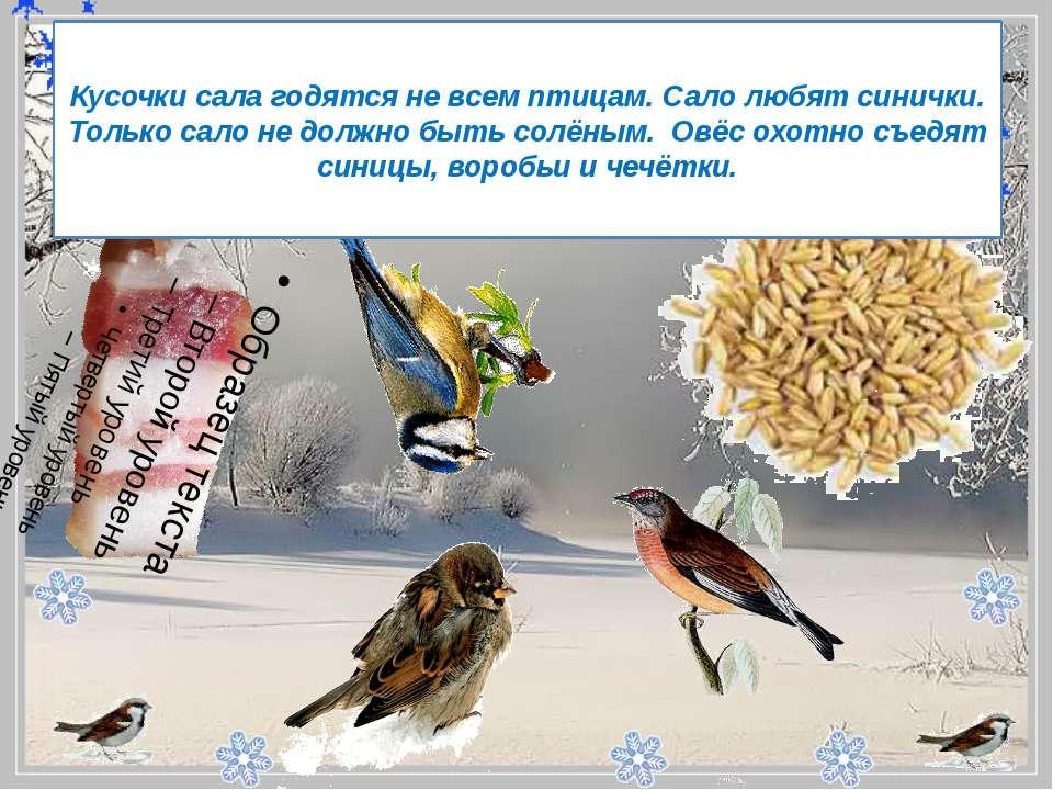 - Кусочки сала годятся не всем птицам. Сало любят синички. Только сало не д...