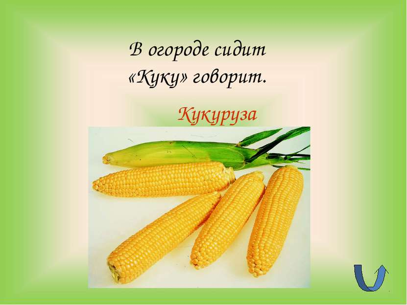 Кукуруза В огороде сидит «Куку» говорит.