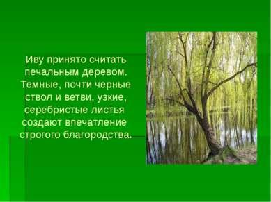 Иву принято считать печальным деревом. Темные, почти черные ствол и ветви, уз...