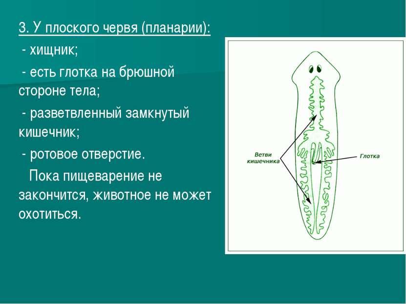 3. У плоского червя (планарии): - хищник; - есть глотка на брюшной стороне те...