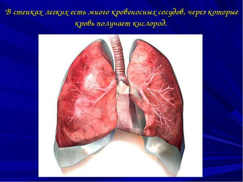 В стенках легких есть много кровеносных сосудов, через которые кровь получает...
