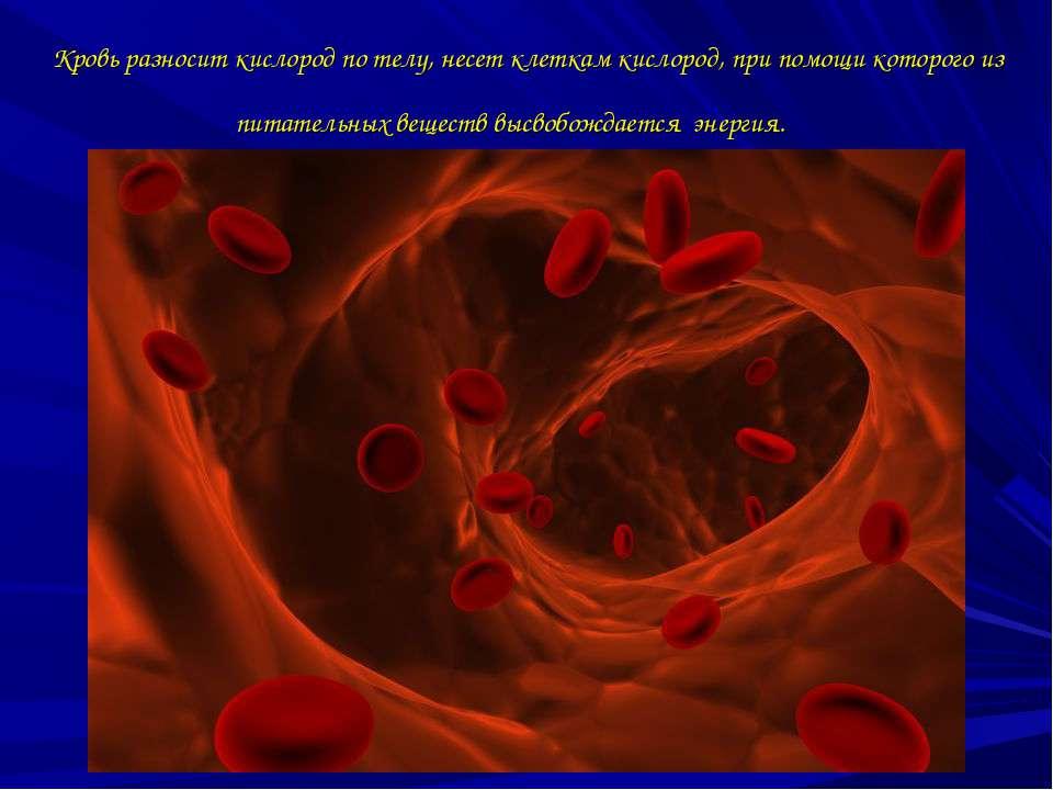 Кровь разносит кислород по телу, несет клеткам кислород, при помощи которого ...