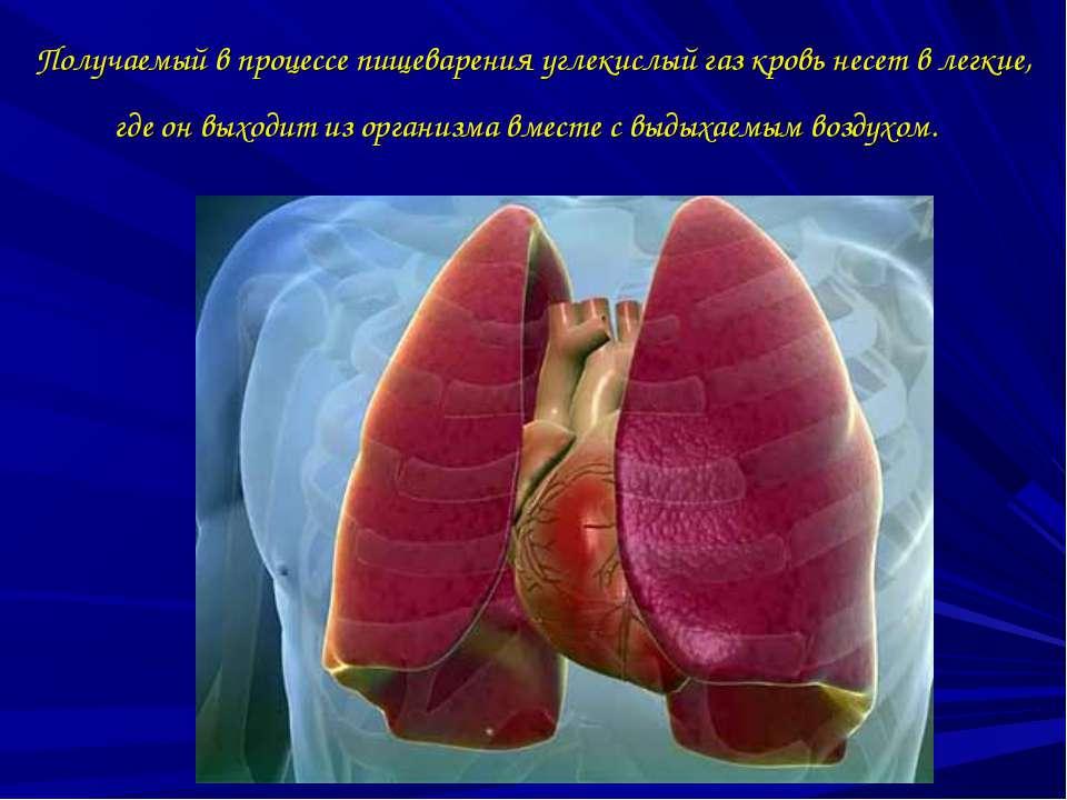 Получаемый в процессе пищеварения углекислый газ кровь несет в легкие, где он...