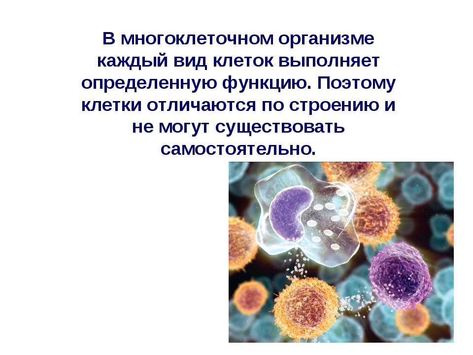 В многоклеточном организме каждый вид клеток выполняет определенную функцию. ...