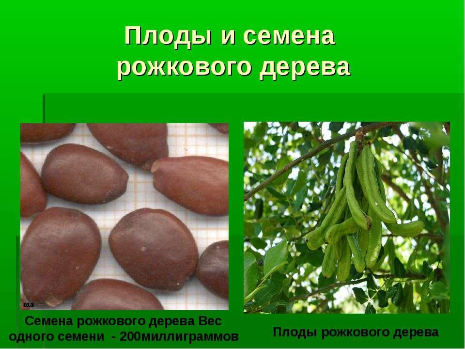 Плоды и семена рожкового дерева Семена рожкового дерева Вес одного семени - 2...