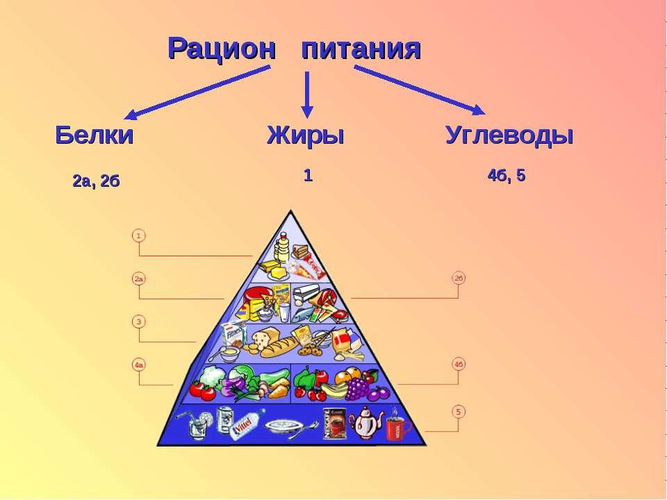Рацион питания Белки Жиры Углеводы 2а, 2б 1 4б, 5