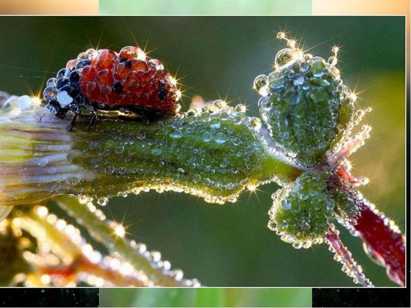 Роса — мелкие капли влаги, оседающие на растениях, почве при наступлении утре...