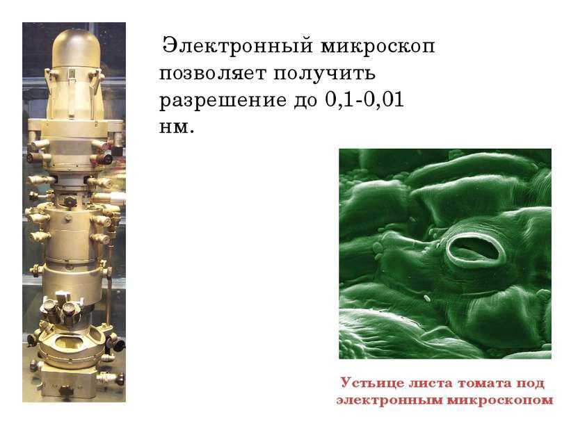 Электронный микроскоп позволяет получить разрешение до 0,1-0,01 нм. Устьице л...
