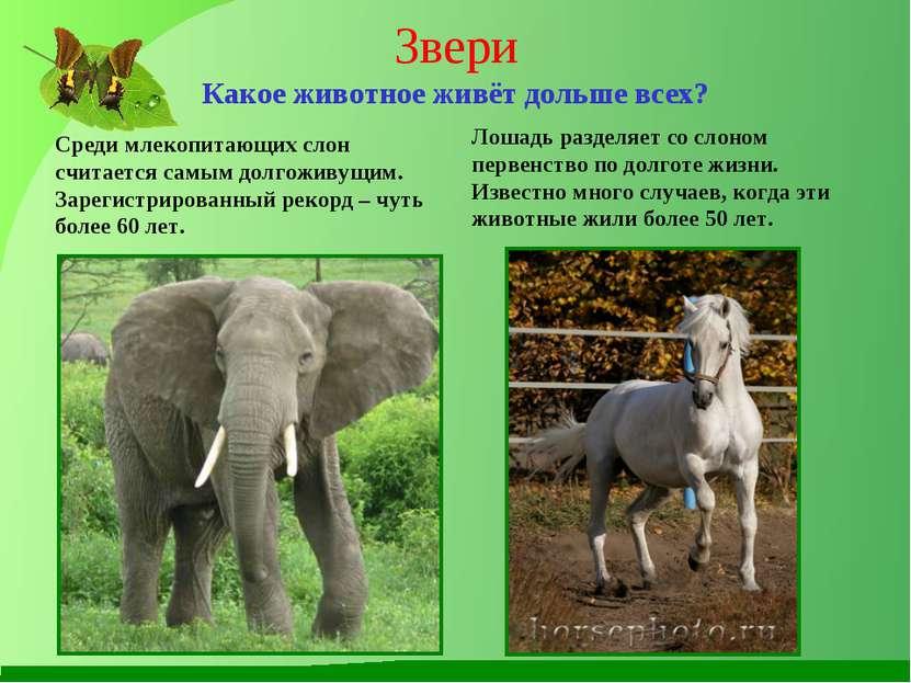 Звери Какое животное живёт дольше всех? Среди млекопитающих слон считается са...