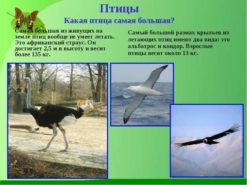Птицы Какая птица самая большая? Самая большая из живущих на земле птиц вообщ...
