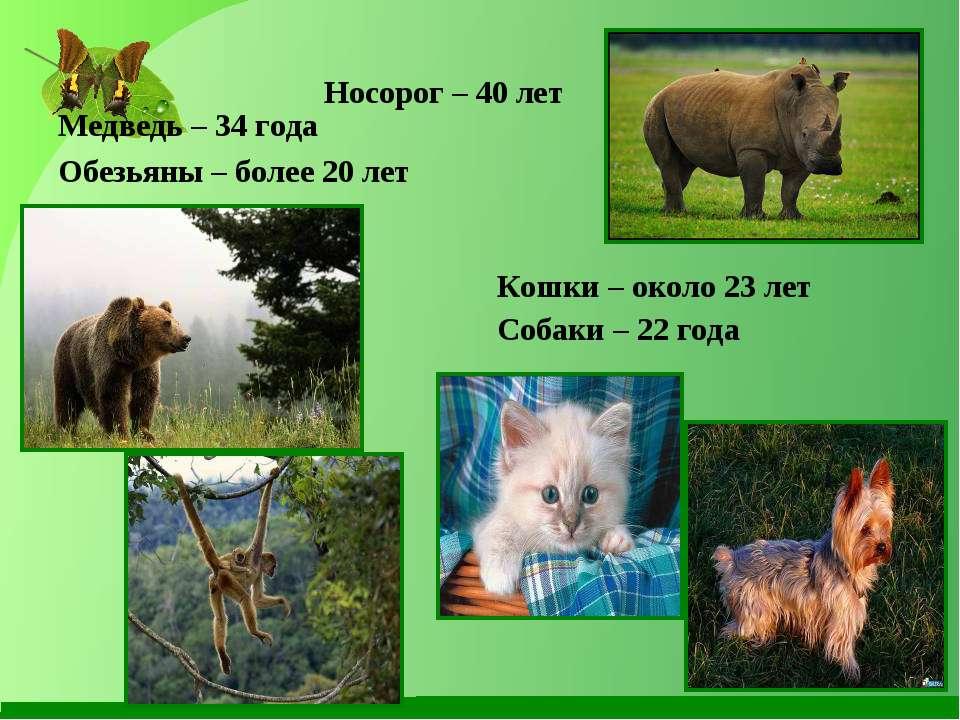 Носорог – 40 лет Медведь – 34 года Обезьяны – более 20 лет Кошки – около 23 л...