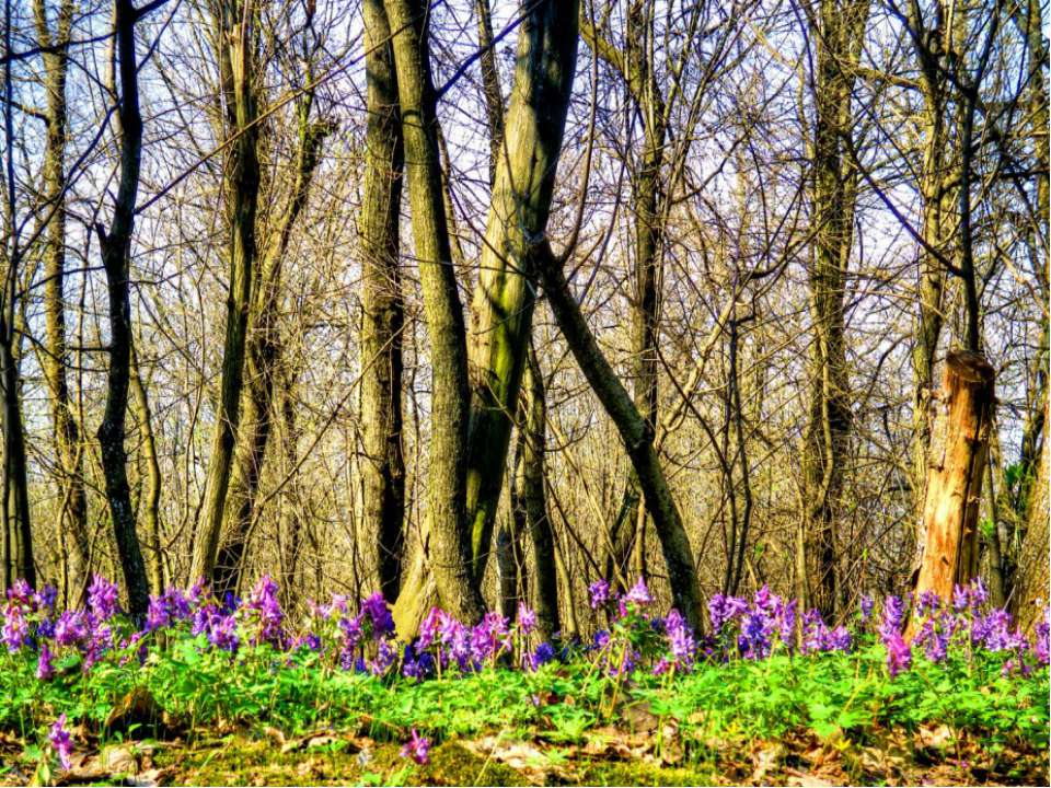 Апрель-цветень с мартом не сравнить. Это месяц, в котором всё зацветает. Прот...