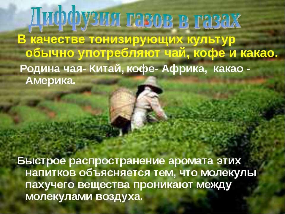 В качестве тонизирующих культур обычно употребляют чай, кофе и какао. Родина ...