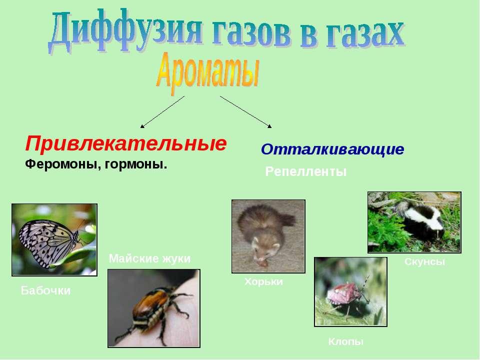 Привлекательные Феромоны, гормоны. Бабочки Майские жуки Хорьки Клопы Скунсы О...
