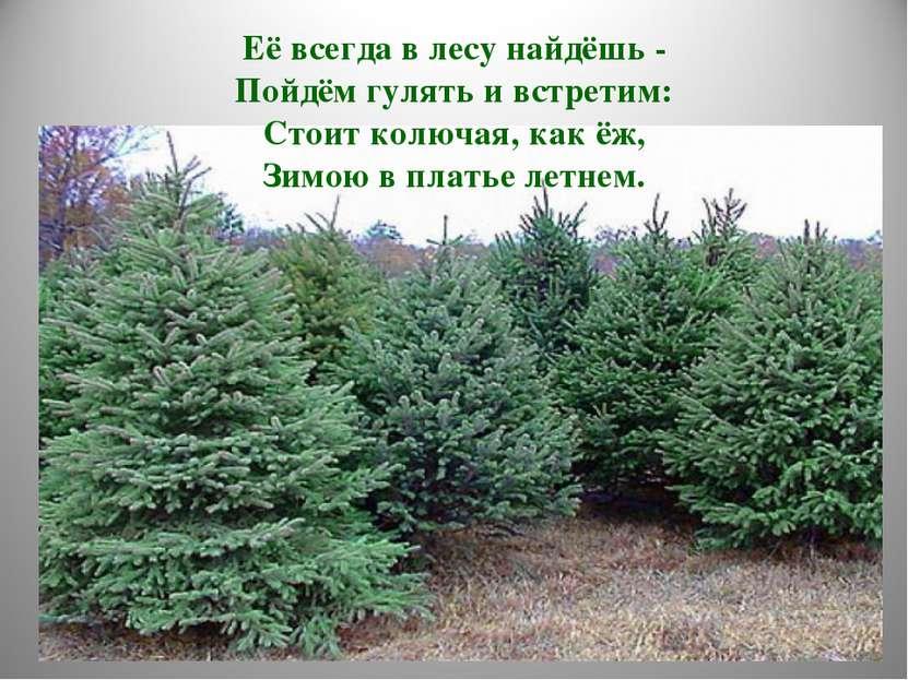 Её всегда в лесу найдёшь - Пойдём гулять и встретим: Стоит колючая, как ёж, З...