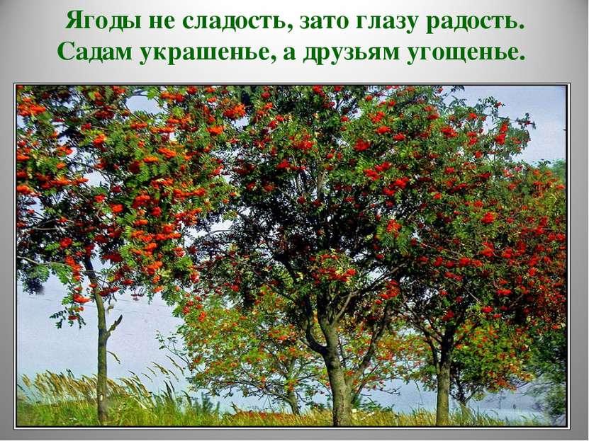 Ягоды не сладость, зато глазу радость. Садам украшенье, а друзьям угощенье.