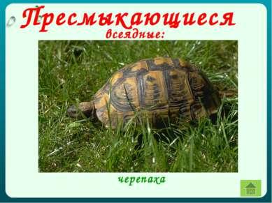 всеядные: черепаха Пресмыкающиеся