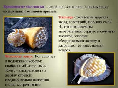 Брюхоногие моллюски - настоящие хищники, использующие изощренные охотничьи пр...