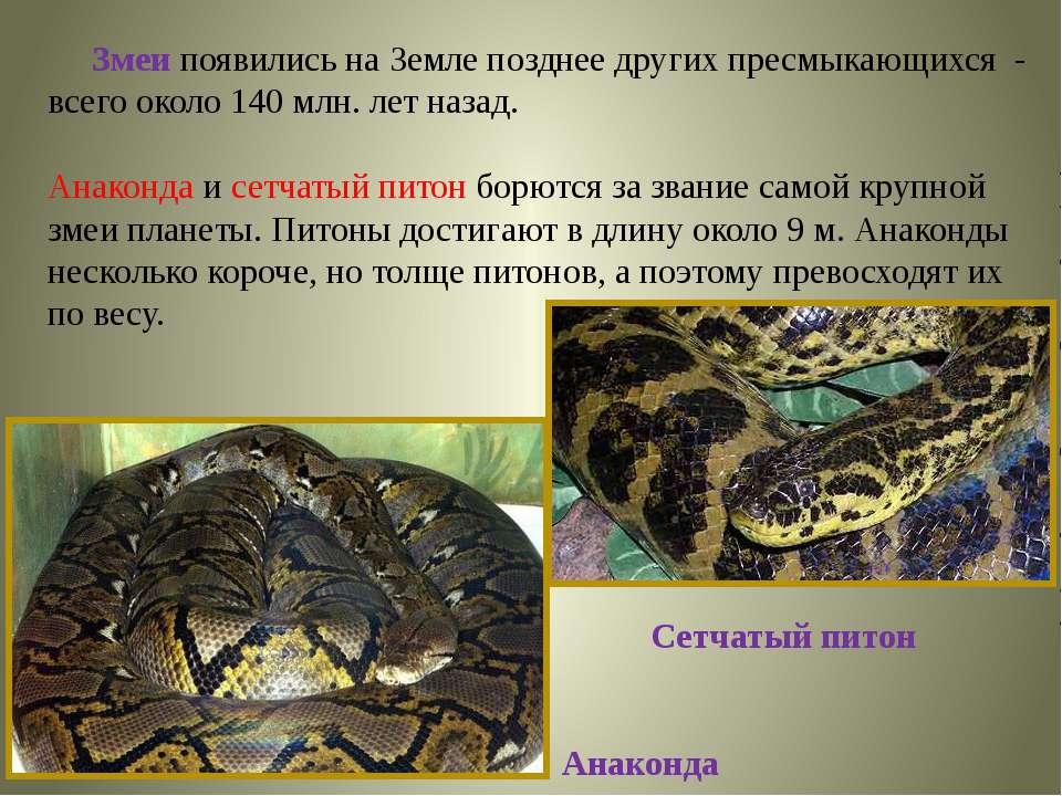 Змеи появились на Земле позднее других пресмыкающихся - всего около 140 млн. ...