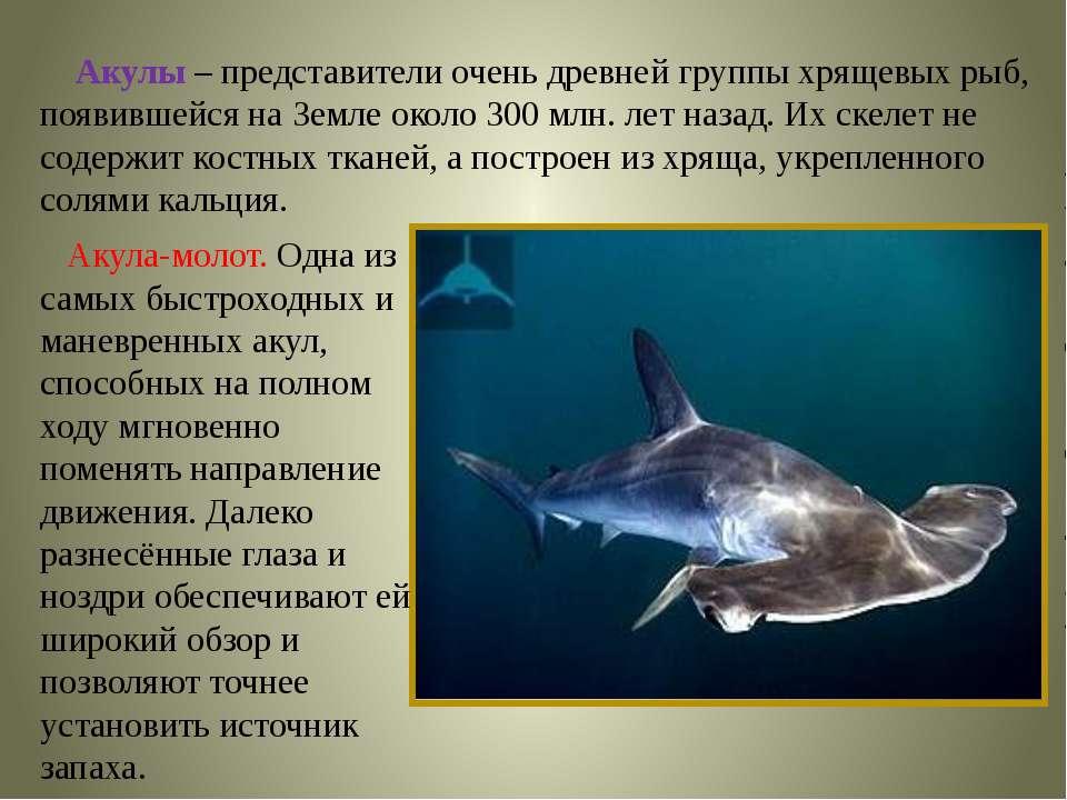 Акулы – представители очень древней группы хрящевых рыб, появившейся на Земле...
