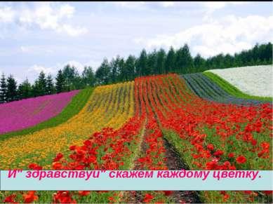 """И"""" здравствуй"""" скажем каждому цветку."""