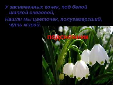 подснежник У заснеженных кочек, под белой шапкой снеговой, Нашли мы цветочек,...