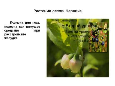 Растения лесов. Черника Полезна для глаз, полезна как вяжущее средство при ра...