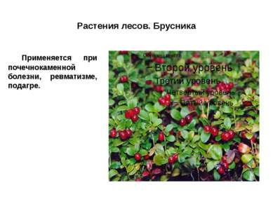Растения лесов. Брусника Применяется при почечнокаменной болезни, ревматизме,...