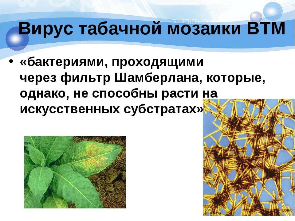 Вирус табачной мозаики ВТМ «бактериями, проходящими черезфильтр Шамберлана, ...