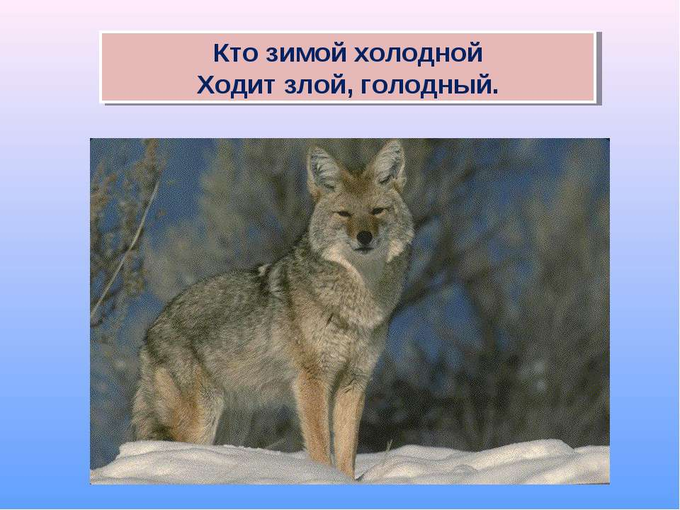 Кто зимой холодной Ходит злой, голодный.