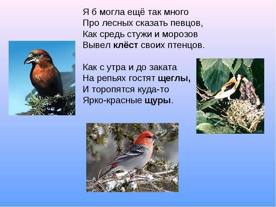 Я б могла ещё так много Про лесных сказать певцов, Как средь стужи и морозов ...