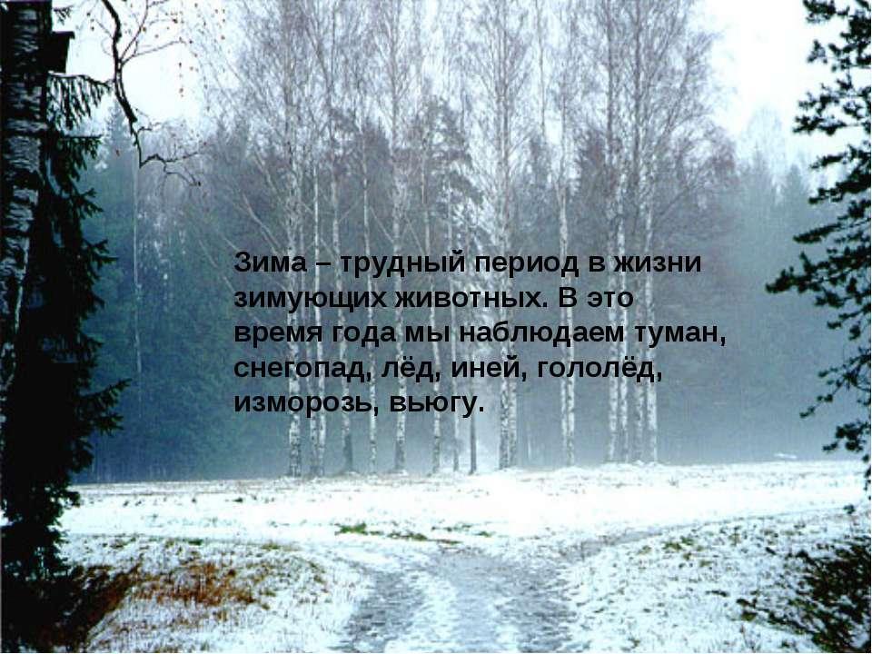 Зима – трудный период в жизни зимующих животных. В это время года мы наблюдае...