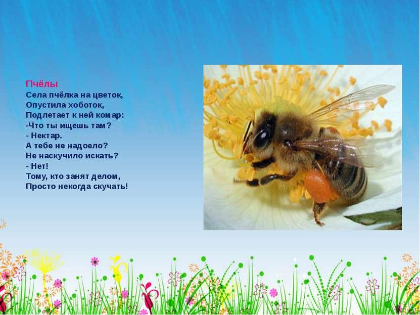 Пчёлы Села пчёлка на цветок, Опустила хоботок, Подлетает к ней комар: -Что ты...