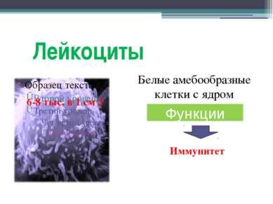 Лейкоциты Белые амебообразные клетки с ядром Функции Функции Иммунитет 6-8 ты...
