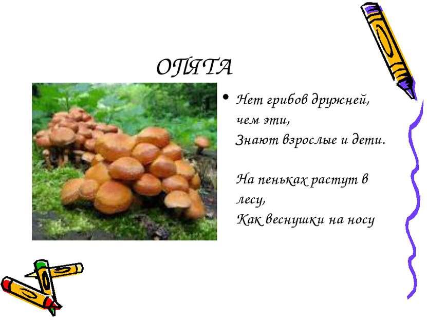 ОПЯТА Нет грибов дружней, чем эти, Знают взрослые и дети. На пеньках растут в...
