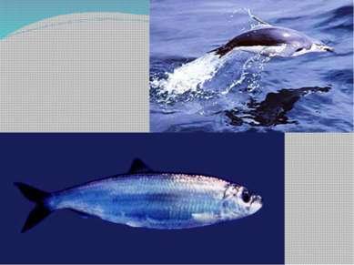 Биологический прогресс эволюционное развитие систематической группы: увеличе...