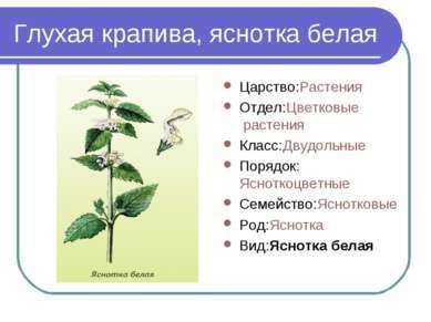 Глухая крапива, яснотка белая Царство:Растения Отдел:Цветковые растения Класс...