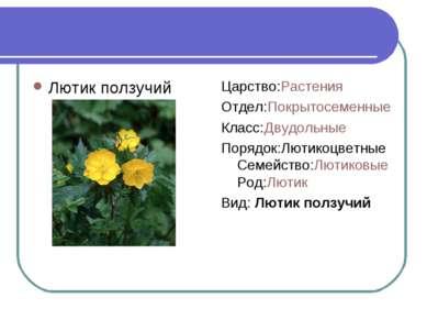 Лютик ползучий Царство:Растения Отдел:Покрытосеменные Класс:Двудольные Порядо...