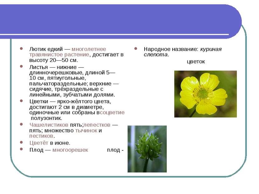 Лютик едкий—многолетнеетравянистое растение, достигает в высоту 20—50см. ...