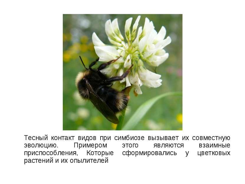 Тесный контакт видов при симбиозе вызывает их совместную эволюцию. Примером э...