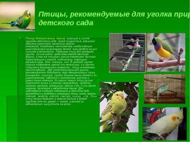 Птицы, рекомендуемые для уголка природы детского сада Птицы декоративные, пев...