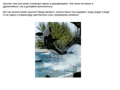 Касатки тоже выступают в морских парках и дельфинариях. Они такие же умные и ...