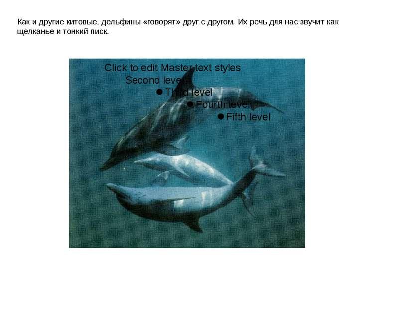 Как и другие китовые, дельфины «говорят» друг с другом. Их речь для нас звучи...