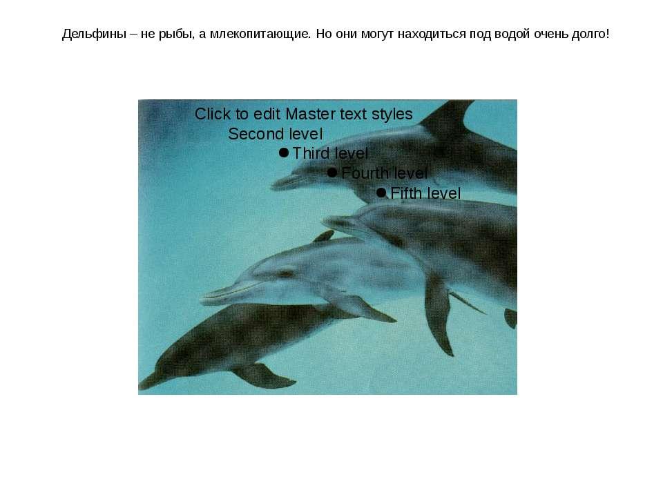 Дельфины – не рыбы, а млекопитающие. Но они могут находиться под водой очень ...